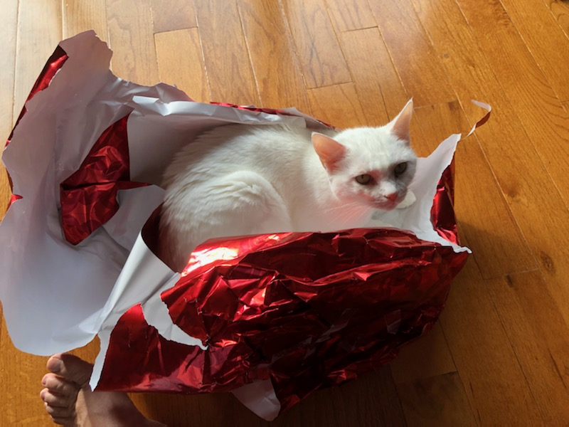 My cat is in Christmas wrapping paper, so maybe never too early for the holidays!