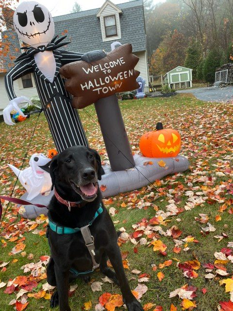 Spooky decoration and cute dog