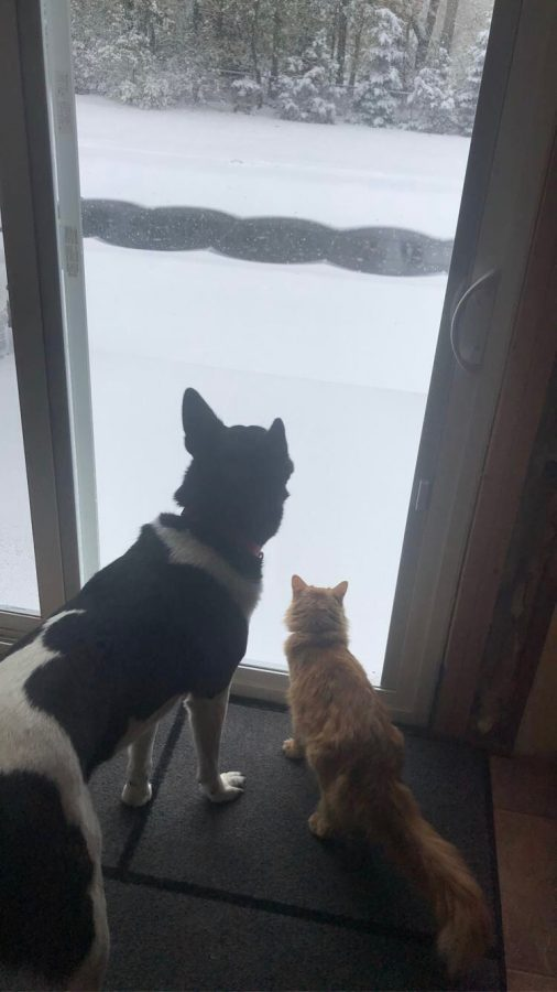Pets long for snow days as much as their owners do.